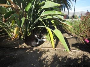 IMG_3886 N-cat