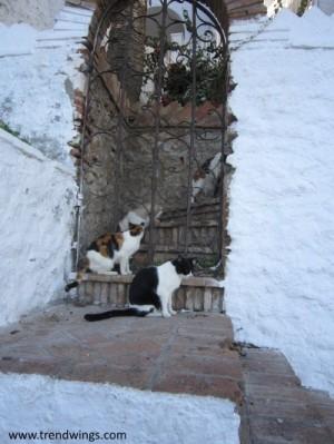 IMG_3896 Nerga cats